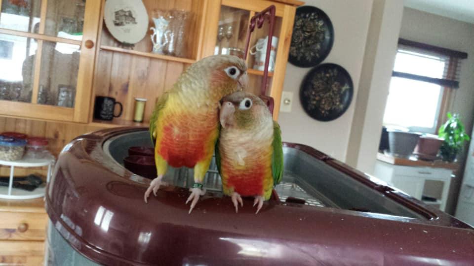 Bob and Houdini